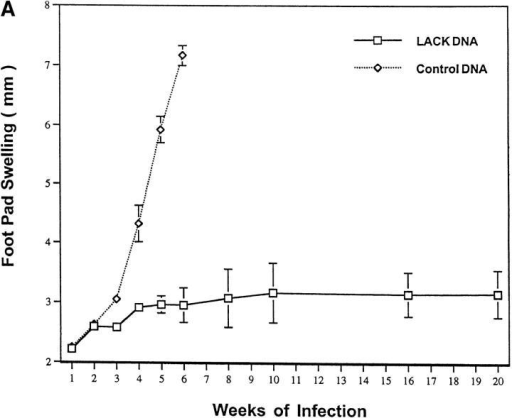 LACK DNA vaccination induces a systemic and durable immune response to mice infected with L. major. (A) BALB/c mice (n = 6/ group) were initially immunized with LACK or control DNA (100 μg)  and boosted 2 wk later. 5 wk after the boost, mice were challenged in the  hind footpad with 105 live L. major metacyclic promastigotes. (B) In a separate experiment, BALB/c mice (n = 6/group) were initially immunized  and boosted 2 wk later with LACK or control DNA (100 μg) in the right  hind footpad. 2 wk after the boost, mice were challenged with 105 live L.  major metacyclic promastigotes in the same or the opposite footpad to  which they recieved LACK DNA vaccination.