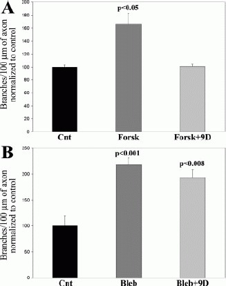 Inhibition of O-GlcNAcase with 9d blocks for-skolin-induced increases in axon branching. (A) Cultures were treated with 50 μM forskolin +/− 200 μM 9d at the time of plating. Control (Cnt) cultures were treated with vehicle for the drugs. Forskolin (Forsk) increased the number of branches per unit axon length at 48 h. Cotreatment with 9d and Forsk prevented the increase in branches induced by forskolin. Comparison of Cnt with Forsk +9d did not reveal a difference (2-tailed Welch t-test). 9d treatment alone did not affect the number of branches relative to Cnt (Figure 3D). n = 70–83 axons per group. (B) Cultures were treated with 50 μM blebbistatin +/− 200 μM 9d at the time of plating. Control cultures were treated with vehicle for the drugs. Blebbistatin (Bleb) increased the number of branches at 48 h. However, 9d did not block the increase in branch number induced by Bleb. n = 84–103 axons per group.