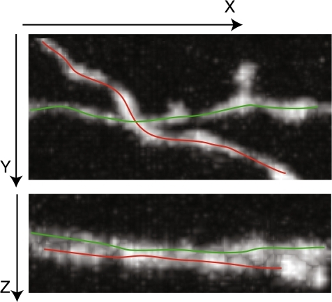 An example of crossover from real data. The top image and the bottom image are showing the same two neurites projected onto X-Y plane and X-Z plane respectively. The color lines indicate how the two neurites cross