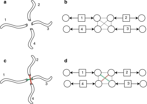 Crossover a in a neurite graph b. The solution c, d gives the minimal sum of the angles between matched neurites. The red and green lines in c and d show how the neurites are merged after matching