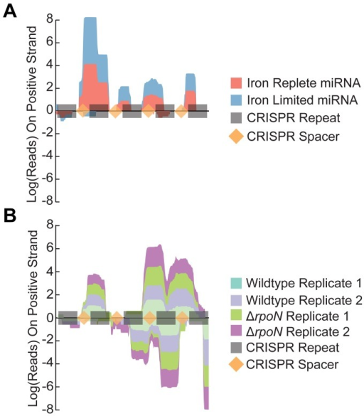 The CRISPR region is defined and strand specific in the miRNA sequencing library.Representation of the total number of reads mapping to the CRISPR region in either miRNA (Panel A) or standard (Panel B) Illumina sequencing libraries. Negative values refer to reads aligning on the negative strand. CRISPR repeat elements are highlighted in grey while the CRISPR spacers are in light orange.