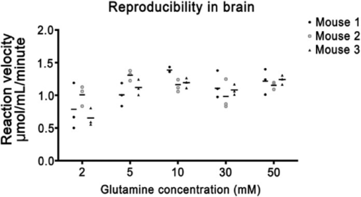 Phosphate-activated glutaminase (PAG) activity in brain tissue sections. All test reactions were corrected for nonspecific background staining in the absence of substrate. For each glutamine concentration, three tissue sections per mouse were analyzed.