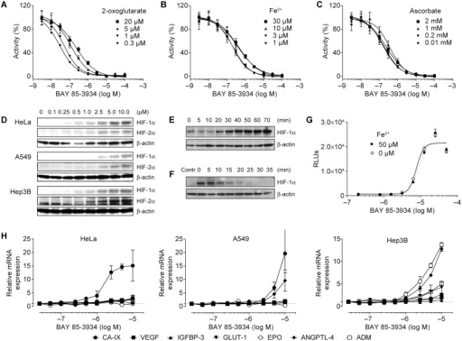 Characterization of the in vitro activity of BAY 85-3934.(A)–(C) Concentration–response curves of hypoxia-inducible factor prolyl hydroxylase (PHD2) activity for BAY 85–-934 after the addition of increasing concentrations of 2-oxoglutarate, Fe2+, and ascorbate. Data, presented as means ± SEM of 4 replicates, were normalized to basal activity without BAY 85-3934 (100%) and residual activity (0%). (D) Detection of HIF-1α and HIF-2α in HeLa, A549, and Hep3B cells by western blot analysis. (E) Time-course of induction of HIF-1α in HeLa cells after addition of serum-free medium containing BAY 85-3934 (5 µM). β-actin levels were measured as a loading control. (F) Time-course of disappearance of HIF-1α in A549 cells after induction with BAY 85-3934 (20 µM). Culture medium was withdrawn and replaced with medium containing cycloheximide (100 µM). β-actin levels were measured as a loading control (D–F show representative data of 3 independent experiments). (G) Concentration–response curve for luciferase activity of A549 HIF-RE2 reporter cells (relative luciferase units [RLUs]) after addition of BAY 85-3934 in the presence or absence of additional Fe2+. Data are presented as means ± SEM of 4 replicates. (H) Relative mRNA expression levels (means ± SD of 2 replicates) of a panel of HIF target genes (shown as fold-increase from baseline levels) after exposure to BAY 85-3934 in HeLa, A549, and Hep3B cells. For definition of gene symbols, see Table 1.