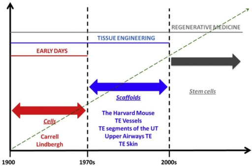"Phases in the history of regenerative medicine. When observing the evolution of regenerative medicine era, three phases can be identified. The first phase spans from the early days to the 1970s. In those days, Alexis Carrel and Charles Lindbergh for the first time had the idea of growing organ outside the human body. For those visionary experiments, Carrel should be referred as father, pioneer, and precursor of concepts that are currently being developed in modern regenerative medicine. In those days, biology was ""cytocentric"" and cells were considered to be the only relevant players in the biology of complex viable systems. Things changed when it was understood that actually the extracellular matrix is as important as cells, in organ welfare; this intuition allowed transition to the second phase which spans from the 1970s to the discovery of stem cells. This intuition was conceptualized by the iconic Harvard mouse, which represents the paradigm of new ideas that paved the ground for a breakthrough in the history of medicine, namely, the bioengineering and implantation of relatively simple body parts like vessels, segments of the urinary tract, and upper airways, bones, skin, and cornea. The third phase began with the discovery of stem cells, wherein the term regenerative medicine has been coined. The discovery of stem cells made us realize that, despite complex organisms like mammals have lost during phylogenesis their ability to regenerate in full their body parts, yet, these cells – if manipulated appropriately – may re-confer us this quiescent ability. In fact, the ultimate goal of regenerative medicine is to max out the regenerative, reparative potential intrinsic to the human body [adapted from Katari et al. (2014), with permission]."