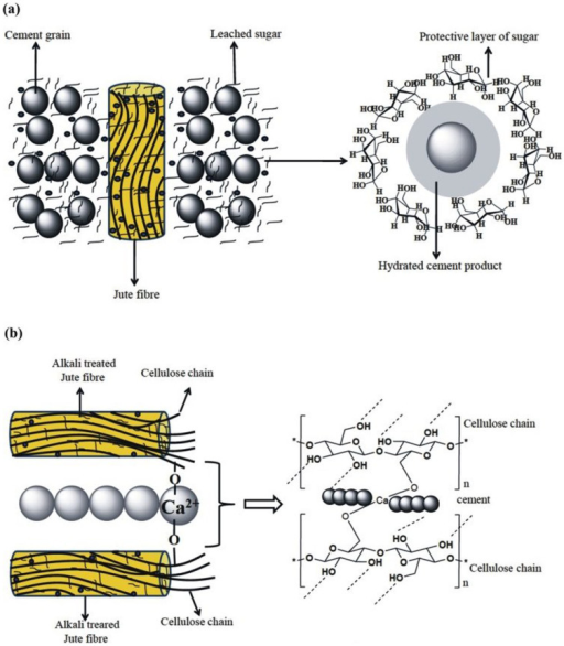 (a) Plausible mechanism for the formation of protective layer of leached sugar (from jute fibre) around the cement grain and (b) plausible mechanism for the formation of bonds between hydrated cement products with the cellulose chain of jute fibre.
