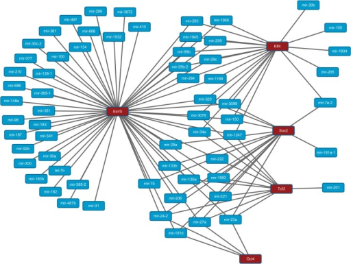 The inferred regulatory relationships for the five TFs studied in our work.The red boxes indicate the five TFs and the blue boxes indicate the miRNAs. The lines between the red and blue boxes indicate the regulatory relationships between the two entities.