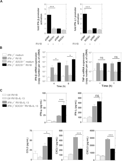 SOCS1 suppressed rhinovirus-induced interferon induction but not rhinovirus-induced proinflammatory cytokine induction. A, SOCS1-transfected cells showed completely suppressed RV1B-induced IFN-β and IFN-λ1 promoter activation versus pORF empty vector control at 24 hours. ***P < .001. B, RV1B-induced IFN-β mRNA expression was increased in ex vivo–cultured BAL macrophages from SOCS1−/−IFN-γ−/− mice compared with IFN-γ−/− mice. No differences were observed between these 2 groups for RV1B-induced TNF-α mRNA. *P < .05. C, RV1B-induced IFN-α expression (8 hours after infection) was significantly increased in RV1B-infected SOCS1−/−IFN-γ−/− mice compared with IFN-γ−/− mice. BAL IFN-λ (24 hours) levels showed a nonsignificant trend for increase in RV1B-infected SOCS1−/−IFN-γ−/− mice, whereas CCL5 levels (24 hours) were also significantly increased in RV1B-infected SOCS1−/−IFN-γ−/− mice compared with IFN-γ−/− mice. CXCL1/KC and LIX/CXCL5 (both 48 hours) were both decreased in BAL fluid from RV1B-infected SOCS1−/−IFN-γ−/− mice compared with IFN-γ−/− mice. A mixture of SOCS1−/−IFN-γ−/− and IFN-γ−/− mice was used for the UV-RV1B and UV-RV1B plus IL-13 groups. *P < .05 and ***P < .001. ns, Not significant.