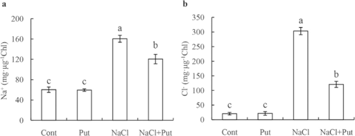 Effects of exogenous putrescine (Put) on Na+(a) and Cl−(b) concentrations in the chloroplasts of cucumber plants grown in nutrient solutions with or without NaCl for 7 days. Each histogram represents a mean ± SE of three independent experiments. Different letters indicate significant differences between treatments (P < 0.05). The data were taken on the third leaves (numbered basipetally) after the final salt treatment (75 mM NaCl). Cont, 0 mM NaCl + 0 mM Put; Put, 0 mM NaCl + 8 mM Put; NaCl, 75 mM NaCl + 0 mM Put; NaCl+Put, 75 mM NaCl + 8 mM Put.
