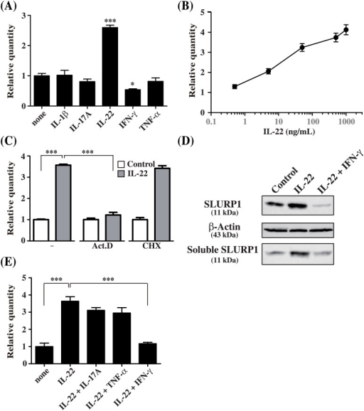 SLURP1 expression is directly and transcriptionally regulated through IL-22.(A, B) NHEKs were stimulated 24 h with the indicated panel of cytokines (50 ng/ml) (A) or with 0.5, 5, 50, 500 and 1000 ng/ml IL-22 (B), after which SLURP1 mRNA levels were measured using quantitative real-time PCR. (C) NHEKs were stimulated with IL-22 or left untreated for 24 h in the presence of actinomycin D (Act. D), cycloheximide (CHX) or the control solvent (DMSO), after which SLURP1 expression was analyzed using real-time PCR. (D, E) NHEKs were stimulated for 24 h with IL-22 or a combination of IL-22 plus IL-17A, TNF-α or IFN-γ. SLURP1 expression was then analyzed using real-time PCR (D) and western blotting (E). Bars depict the mean ± S.D. (n = 6). *p < 0.05, ***p < 0.001 (one-way ANOVA).