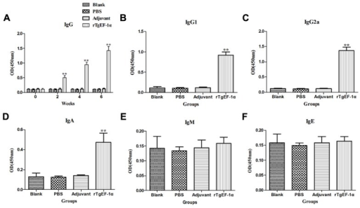 The dynamics of specific antibody level in BALB/c mice induced by rTgEF-1α vaccination. (A) Determination of IgG antibodies in the sera of BALB/c mice immunized with rTgEF-1α, Adjuvant, PBS and Blank controls on weeks 0, 2, 4, 6. Determination of IgG subclass (B) IgG1 and (C) IgG2a, (D) levels of class IgA, (E) levels of class IgM, and (F) levels of class IgE in the sera of the immunized BALB/c mice 2 weeks after the last immunization. Results are expressed as mean of the OD450 ± SD (n = 5) and statistically significant difference (∗P < 0.05) and (∗∗P < 0.01).