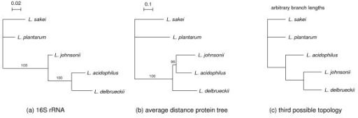 Phylogenetic trees. a, phylogenetic tree based on 16S rRNA sequences by maximum likelihood; b, phylogenetic tree based on average distance from 480 single copy protein families; c, third possible tree topology for the acidophilus complex. Bootstrap support values for internal branches are indicated. Evolutionary distance scales for trees a and b are presented (expected number of substitutions per site). 16S rRNA tree reconstruction is based on a HKY model (expected transition/transversion ratio 1.68 and expected pyrimidine transition/purine transition ratio 0.62) with rate heterogeneity between sites modeled using a gamma distribution with coefficient of variation 2.64. Pairwise evolutionary distances for proteins are estimated with a JTT model and include separate gamma-corrections for each protein family (average coefficient of variation is 1.14).