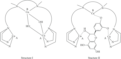 Proposed structuresfor the trinuclear copper(II) complexes (I) and for the putative intermediateadducts (II) with the catechins.