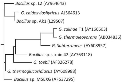 Rooted phylogenetic tree showing the relationship of isolate Bacillus sp. L2 to other Bacillus and Geobacillus species with their accession numbers.