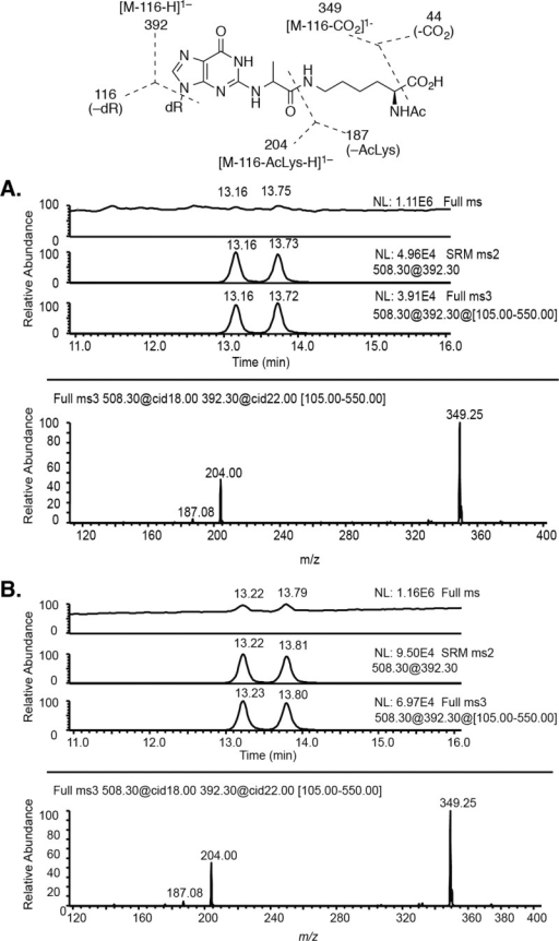 UPLC chromatogram ofthe full scan mode (105 − 1100 Da),reconstructed ion chromatograms of SRM scan mode and MS3 fragment ions, and MS3 product ion spectrum of the dGuo-methylglyoxal-AcLyscross-link (1). (A) From the reaction of dGuo, AcLys,and methylglyoxal (1:1:4). (B) Authentic cross-link standards of 1.
