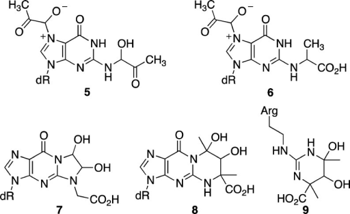 Proposedstructures of the 2:1 adducts of methylglyoxal or glyoxalwith dGuo.