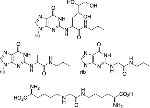 Model cross-links formed by methylglyoxaland related 1,2-dicarbonyls.