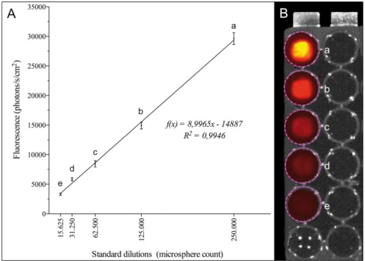 Fluorescence analysis of standard microsphere dilutions.A Correlation between microsphere amounts and fluorescence signals, which allows the calculation of microsphere concentrations in the function of fluorescence signals. B Standard dilutions between 250.000 (a) and 15.625 (e) were arranged on 96-well plates.