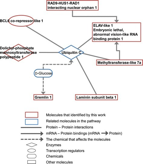 Pathway analysis of nine genes selected by discriminant analysis.