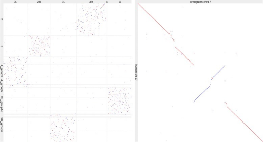 Genome alignments. Left: D. melanogaster (horizontal) versus D. pseudoobscura (vertical). Right: orangutan versus human chromosome 17. Red indicates same-strand alignments and blue indicates opposite-strand alignments