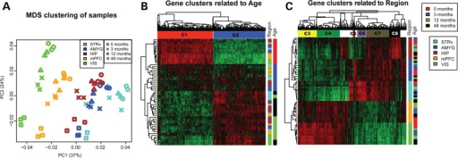 Gene expression is associated with both brain region and development stages. (A) MDS using all genes shows that samples cluster by both region (x-axis) and age (y-axis). Brain regions are illustrated by different shapes, while ages are labeled by different colors. The x- and y-axes represent the first and second PC, respectively, with the percent variance explained by each coordinate in parentheses. (B and C) Heatmap of top 1000 ANOVA genes for age (B) and region (C). Genes are hierarchically clustered along the x-axis, and gene clusters associated with different ages and regions are labeled by horizontal color bars. Samples are clustered along the y-axis and are color coded based both on region (left vertical bars) and age (right vertical bars).