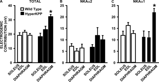 The NKA electrogenic contribution at 4.7 mM K+ was significantly greater in the HyperKPP diaphragm than in the EDL and soleus. (A) Total NKA electrogenic contribution calculated from the difference in resting EM in the absence and presence of 100 µM ouabain, which fully inhibits NKAα1 and NKAα2 activity. (B) NKAα2 electrogenic contribution calculated from the difference in resting EM in the absence and presence of 1 µM ouabain, which reduced the activity of NKAα2 by 92% and that of NKAα1 by 6%. (C) NKAα1 electrogenic contribution calculated from the difference in total and NKAα2 electrogenic contribution. Error bars represent the SEM for the number of fibers and muscles given in Fig. 8. *, mean electrogenic contribution in HyperKPP was significantly different from the mean value for wild type; ANOVA and LSD; P < 0.05.