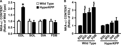NKAα1 protein content was significantly higher in HyperKPP than in wild-type EDL, whereas there was no difference for the soleus, diaphragm, and FDB muscles. (A) For each muscle, NKAα1 contents were calculated as a ratio of the content in wild-type muscle. (B) For each of wild-type and HyperKPP, NKAα1 contents were calculated as a ratio of the EDL content. Error bars represent the SEM of five muscles. §, mean NKAα1 content significantly different from mean content in EDL; *, mean NKAα1 content was significantly different from wild-type content; ANOVA and LSD; P < 0.05.