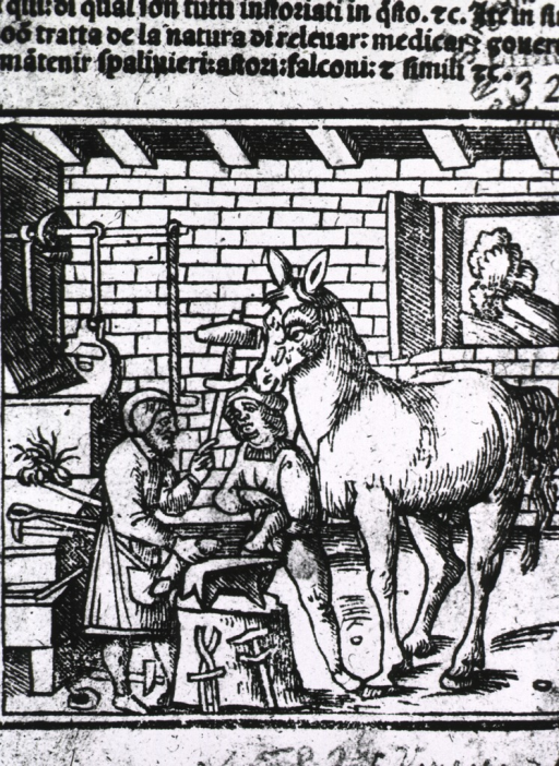 <p>Interior view: a farrier and his assistant are examining the leg of a horse.</p>