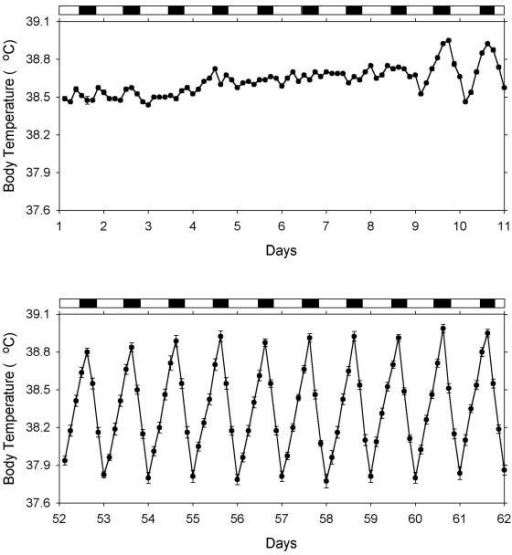 Mean body temperature of 8 calves measured every 3 hours. Values shown are means ± SEM of the body temperature of 8 calves measured every 3 h during the first 10 days of life (top) and during days 52 through 61 (bottom). The white and dark bars at the top of each panel indicate the duration of the light and dark phases of the light-dark cycle, respectively.