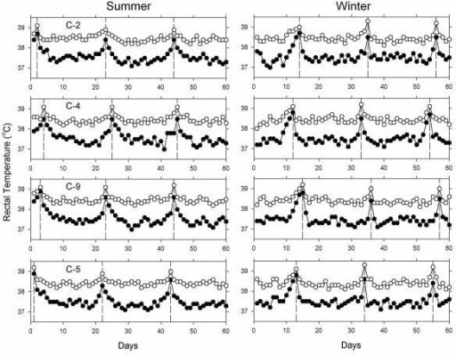 Daily measurements of body temperature over 3 estrous cycles. Shown are the records of body temperature of four representative cows measured at dusk (open circles) and dawn (closed circles) for 60 consecutive days during the summer (left) and winter (right). Vertical dashed lines indicate the days of estrus, as determined by observation of vaginal discharge, increased locomotor activity, and acquiescence to mounting by a bull.