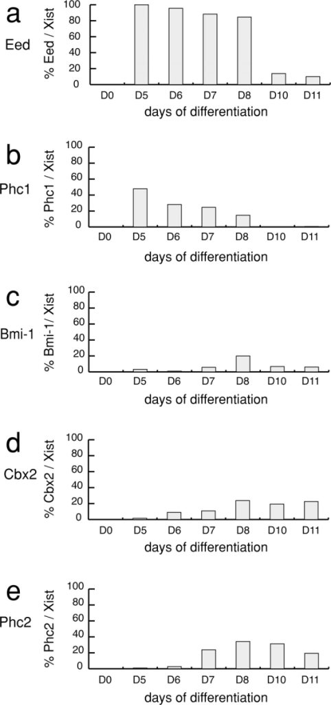 Kinetics of Xi enrichment of mPRC1 proteins in differentiating ES cells. The proportion of differentiating female ES cells exhibiting Xi enrichment for Eed (a), Phc1 (b), Bmi-1 (c), Cbx2 (d), and Phc2 (e) were determined over an 11 d time course. At each time point the percentage of Xist RNA-coated Xis that exhibited enrichment for the PcG protein indicated was calculated. At day 0 >100 cells were assayed and Xi enrichment of Xist or mPRC1 proteins was not detected. At each time point after day 0, percentages are based on counts of between 100 and 750 nuclei that exhibited Xist RNA coating of the Xi.