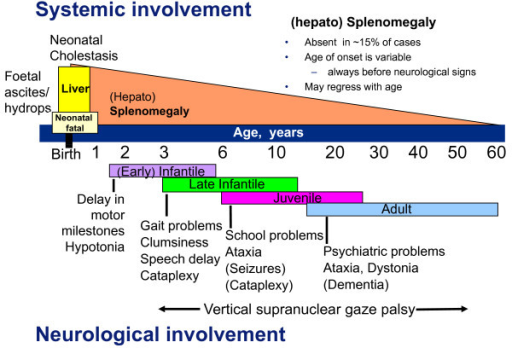Niemann-Pick disease type C as a neurovisceral disease. Schematic representation of the main forms of the disease, with particular emphasis on type and age of onset of first neurological symptoms