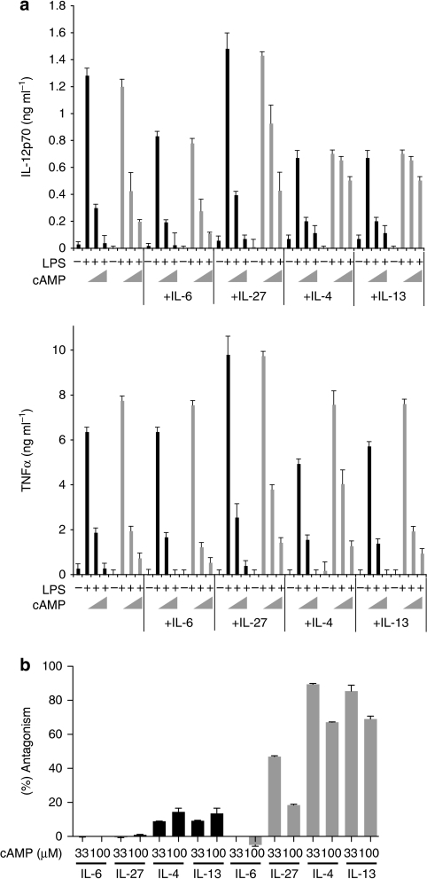 Select cytokines partially antagonize the cAMP-mediated immunosuppression.Socs1+/+ (5×105 cells per ml; black bars) and Socs1−/− (5×105 cells per ml; grey bars) BMDCs were stimulated with LPS (10 ng ml−1) and graded concentrations of 8-Br-cAMP (0, 33 and 100 mM) for 12 h with or without recombinant murine IL-6 (20 ng ml−1), IL-27 (100 ng ml−1), IL-4 (20 ng ml−1) and IL-13 (20 ng ml−1). (a) The levels of IL-12p70 and TNFα in the culture supernatant were measured by ELISA. Error bars indicate +s.d. Cells were stimulated in triplicate wells for each condition and s.d. was calculated from the values determined by ELISA. (b) The normalized antagonistic effect (% antagonism) of the indicated cytokines against the suppressive effect of cAMP for the production of IL-12p70. Data were calculated from a data set shown in panel a. Data are representative of two independent experiments (a, b).