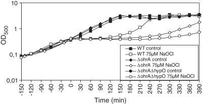 The OhrA peroxiredoxin and the nitroreductase HypO protect cells against hypochlorite toxicity. Growth phenotype of B. subtilis wild-type (WT), ΔohrA and ΔohrAΔhypO mutant strains that were treated with 75 µM NaOCl at an OD500 of 0.4. The growth curves are representives of at least three independent growth experiments. Two biological replicates are shown in Supplementary Figure S3A–S3C.