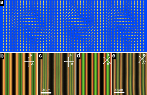 Director structure and POM images of periodic cholesteric finger arrays.(a) Director field in the vertical cross-section of a periodic finger array. (b) (c) POM textures obtained (b) by means of computer simulations and (c) experimentally for crossed polarizer and analyzer parallel and perpendicular to fingers, respectively. (d) (e) POM textures obtained (d) by means of computer simulations and (e) experimentally for crossed polarizer and analyzer at π/4 to fingers. Both experimental and computer-simulated POM textures were obtained for d = p = 10 μm.