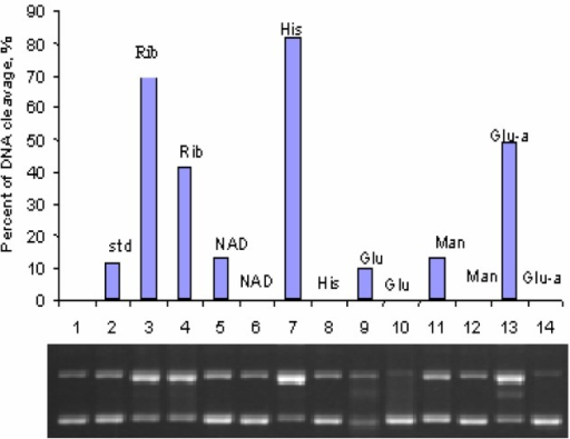 Effect of biologically relevant molecules on light-induced DNA cleavage by pyrene. ΦX-174 plasmid DNA (27μM in base pairs) was mixed with 60μM pyrene and various biological chemicals and was irradiated for 1 h with a 100 W UVA lamp. Lane 1 is the dark control and lane 2 is the positive control with pyrene and DNA but without any added chemicals. Lanes 3, 5, 7, 9, 11, and 13 are the mixtures of DNA and pyrene irradiated for 1 h in the presence of riboflavin (5 mM), NAD (5mM), Histidine (5mM), Glutathione (0.5mM), Mannitol (0.5mM), and Glutamic acid (0.5mM), respectively. Lanes 4, 6, 8, 10, 12, 14 are the same as 3, 5, 7, 9, 11, and 13, respectively, but without pyrene.