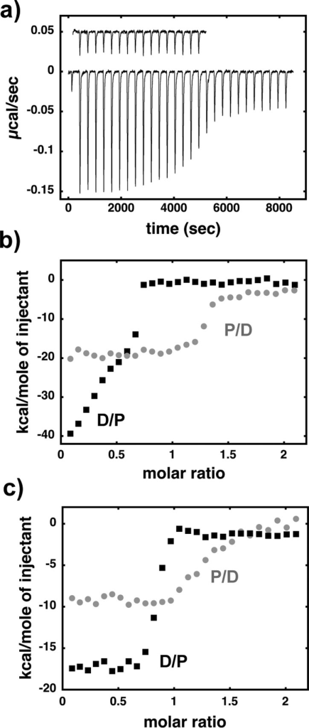 ITC shows a complex behaviorconsistent with formation of higher-ordercomplexes, even at higher salt concentrations. (a) Raw heats of bindingfor a representative titration of DBD601 into TeloA inbuffer HN50. Also included (offset) is the contributionfor the heat of dilution from a reference titration of DBD601. (b) Change in normalized heat as a function of molar ratio for20 μM TeloA titrated into 2 μM DBD601 (black)and 20 μM DBD601 titrated into 2 μM TeloA (gray)in buffer HN50 at 20 °C. (c) Change in normalizedheat as a function of molar ratio for the same experiments as in panelb but performed in buffer HN150 at 20 °C.