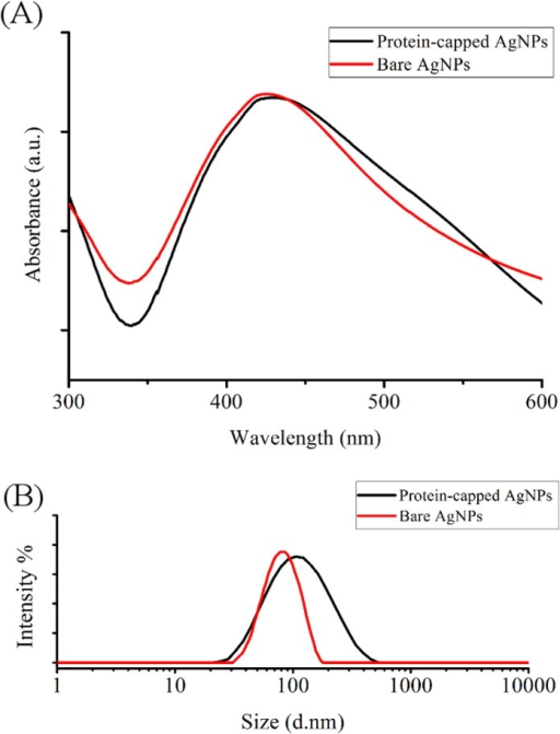 (A) UV visible spectra and (B) particle size distribution of protein-capped and bare silver nanoparticles.