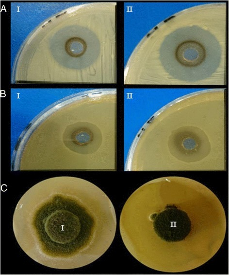 Antimicrobial activity of the different copper forms against (a) Escherichia coli Z1, (b) Streptomyces parvulus and (c) Aspergillus flavus where (I) refers to CuSO4 and (II) refers to CuNPs. Antibacterial activity of Cu-particles and CuSO4 was carried out at the concentration 100 μg/mL while antifungal activity was assayed at the concentration 200 μg/mL