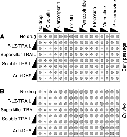 In vitro sensitivity of glioma cells to TRAIL in combination with chemotherapy drugs. Cells from 17 early passage glioma cell lines (A) and 5 uncultured gliomas (B) were incubated in vitro with the stated formulations of TRAIL or anti-DR5 antibody, alone or together with the listed chemotherapy drugs. The resulting survival was assayed and graphed as described in the legend to Figure 1. Grey circles depicting average survival are overlaid upon black circles indicating average survival plus standard error.