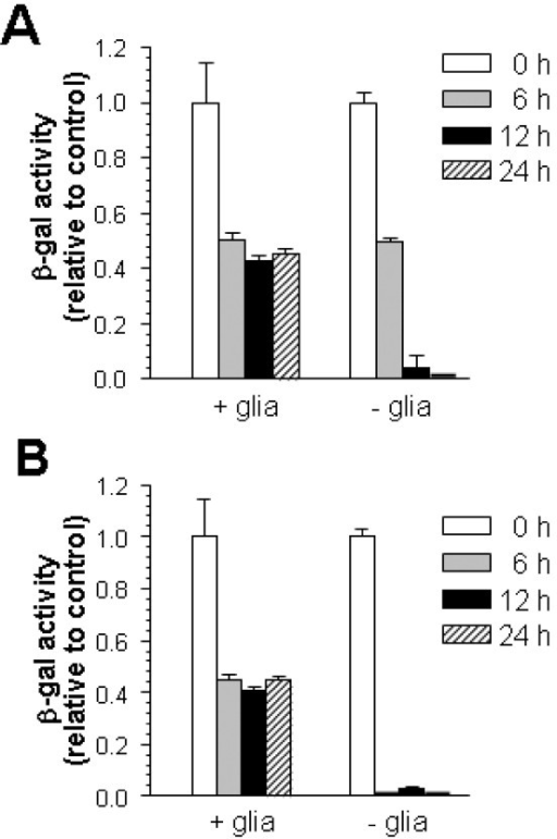 "Glutamate is unable to activate neuronal NFκB in mixed cell cultures. Neocortical neurons from κB/β-gal transgenic mice were either plated on the top of wild-type astrocytes (""+glia"") or retained as nearly pure neuronal cultures (""-glia""). A. Glutamate was applied at 50 μM for 10 min, then chased for the times indicated (h). B. Glutamate was applied at 20 μM continuously for the times indicated (h). β-gal activity was determined by a luminescent assay. Values represent activity relative to untreated cultures ± SEM in quadruplicate cultures. ANOVA followed by Scheffe post-hoc test showed significance between control and each treatment, and between the ""+glia"" and ""-glia"" in all comparisons except the 6 h timepoint in A. (p < 0.02)."