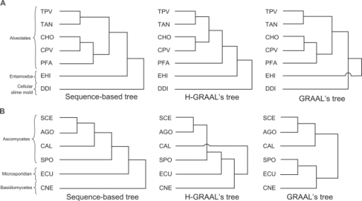 "A) Comparison of the phylogenetic trees for protists obtained by genetic sequence alignments (left), H-GRAAL's metabolic network alignments (middle), and GRAAL's metabolic network alignments (right). The following abbreviations are used for species: CHO—Cryptosporidium hominis, DDI—Dictyostelium discoideum, CPV—Cryptosporidium parvum, PFA—Plasmodium falciparum, EHI—Entamoeba histolytica, TAN—Theileria annulata, TPV—Theileria parva; the species are grouped into ""Alveolates"", ""Entamoeba"", and ""Cellular Slime mold"" classes. B) Comparison of the phylogenetic trees for fungi obtained by genetic sequence alignments (left), H-GRAAL's metabolic network alignments (middle), and GRAAL's metabolic network alignments (right). The following abbreviations are used for species: AGO—Ashbya gossypii (Eremothecium gossypii), CAL—Candida albicans, CNE—Cryptococcus neoformans, ECU—Encephalitozoon cuniculi, SCE—Saccharomyces cerevisiae, SPO—Schizosaccharomyces pombe; the species are grouped into ""Ascomycetes"", ""Microsporidian"", and ""Basidiomycetes"" classes."