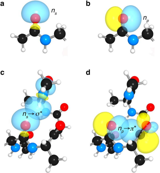 Kinship of hydrogen bonds and n→π* interactions in an α-helixa, s-rich lone-pair of an amide oxygen. b, p-rich lone-pair of an amide oxygen. c, ns→σ*: hydrogen bond in an α-helix. d, np→π*: n→π* interaction in an α-helix.