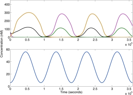 Frequency multiplication for a sine input with an offset.Time series for the repressors R1–R4 and the input are shown in the top and bottom panels respectively. The concentrations of R1, R2, R3 and R4 are represented by pink, black, orange and green lines respectively. Initial conditions:  nM,  nM. The input is the following function: , where , p is the period, t is time, a is amplitude and  is the minimum of the input.  nM. Parameters from table 1 are used.