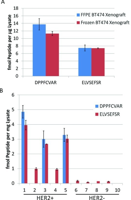 (A) Quantification of HER2 receptor protein in frozen (red bars)and FFPE (blue bars) BT474 xenograft tissues. HER2 protein was quantifiedbased on MRM of peptides representing the extracellular (DPPFCVAR)and intracellular (ELVSEFSR) domains of the receptor. MRM quantitationwas by stable isotope dilution. Plotted values are mean ± SDfor 3 process replicates of one frozen and one FFPE tumor. (B) Quantificationof HER2 receptor protein in 5 human HER2-positive and 5 HER2 negativehuman FFPE breast tumor tissues. MRM quantitation was by stable isotopedilution analysis of peptides representing the extracellular (DPPFCVAR)and intracellular (ELVSEFSR) domains of HER2. Plotted values are mean± SD for 3 process replicates of each specimen.