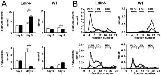 Hepatic Znf202 overexpression reduces HDL-cholesterol in Ldlr−/− and WT mice.Blood samples were drawn from Ldlr−/− (n = 4; left panels) and WT mice (n = 4; right panels) 5 days after injection with 2.109 pfu of Ad.Znf202 (filled bars) or with Ad-mock (open bars) and derived plasma was analyzed for triglyceride and total cholesterol content (A). Lipoprotein profiles were determined from Ldlr−/− (left panels) and WT mice (right panels) 5 days after injection with Ad.Znf202 (triangles) or with Ad-Mock (squares). The elution fractions were tested for triglyceride and total cholesterol content (B). * and ** indicates p<0.05 and p<0.001, respectively.