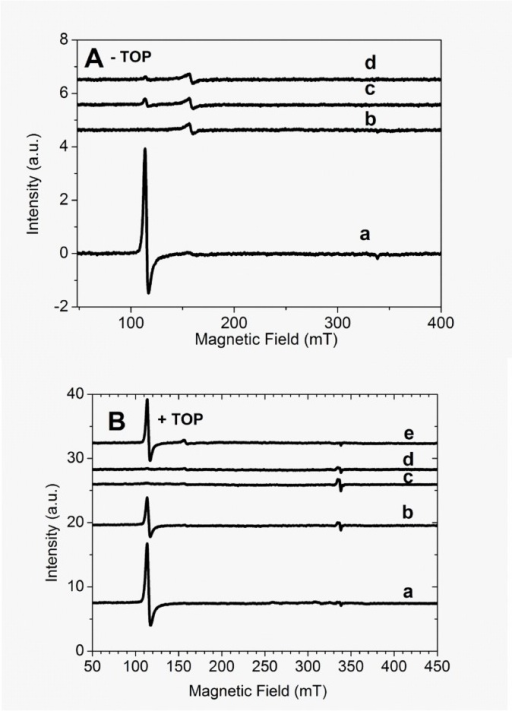EPR spectra of Mb.A) Absence of TOP. Line a = 5 µM Fe3+Mb, lines b, c and d are the respective EPR spectra obtained immediately, 30 min, and 180 min after the addition of 50 µM H202. B) Presence of 20 µM TOP: Line a = 5 µM Fe3+Mb, lines b, c, d and e are the respective EPR spectra obtained immediately, 30, 60, and 90 min after the addition of 50 µM H2O2. The expanded field view shows the signal of a free radical signal overlapped on the g2 component of EPR spectrum of heme iron obtained 30 min after the addition of H2O2. When present, TOP was previously treated with 1 mM TCEP. The concentration of DMPO = 20 mM. EPR conditions were: microwave frequency = 9.47177 GHz, central field, 240 mT, scanning field, 400 mT, number of points, 2048, modulation amplitude, 1 mT, gain, 45 dB, temperature, 4.30 K, time constant, 20.5 ms, conversion time, 81.9 ms, microwave power, 5 mW. The reactions were carried out in 20 mM Tris buffer pH 7.4 treated with Chelex-100®.