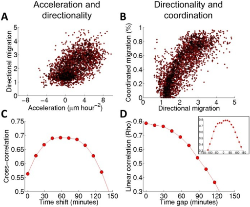 Association among the waves for DA3 tumor cells exposed to HGF/SF.(A, C): The association between the waves of acceleration and directionality; (B, D): the association between the waves of directionality and coordination. (A) Scatter plot comparison of directionality vs. acceleration. Each dot in a scatter plot represents an element (t,d) in the two corresponding spatiotemporal maps, accumulated over all the experimental replicates (N = 5). (B) Similar to (A) but for the coordination vs. directionality. (C) Cross correlation between acceleration and directionality. The graph shows the Pearson correlation for different time shifts computed between the spatiotemporal maps of acceleration and directionality accumulated for all the experiments. (D) Cross correlation between the spatiotemporal maps of directionality and coordination accumulated for all the experiments. Inset: cross correlation between a spatiotemporal map of directionality and coordination demonstrating about 30 minutes time shift for a specific experiment.