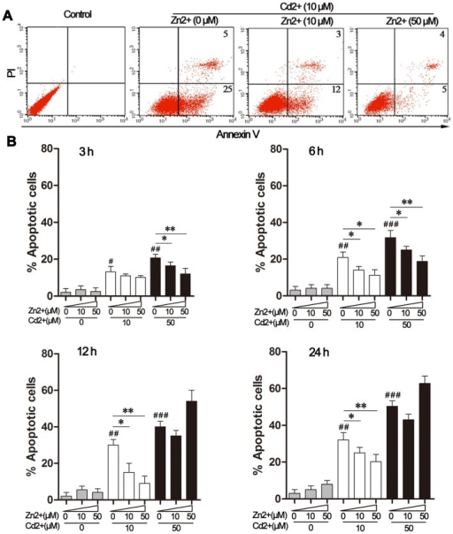 Effects of Zn2+ and Cd2+ on MDBK apoptosis.(A) MDBK cells were treated with 10 μM CdCl2, alone or in combination with ZnCl2 (0, 10, or 50 μM), for 12 h. Apoptotic cell death was quantified by flow cytometry following double staining with propidium iodide (PI) and a fluorescein isothiocyanate (FITC)-conjugated annexin V antibody. Control cells were treated with medium. (B) MDBK cells were treated with CdCl2 alone (0, 10, or 50 μM) or in combination with ZnCl2 (0, 10, or 50 μM) for the indicated time periods. The percentage of PI- or annexin V-positive apoptotic cells was quantified by flow cytometry. The data were expressed as the mean ± SD (n = 4). #P<0.05, ##P<0.01, and ###P<0.001 for the comparison with the medium-treated control group; *P<0.05 and **P<0.01 compared to cells exposed to Cd2+ only (10 or 50 μM).