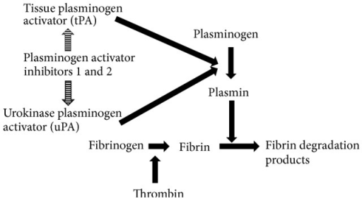 Role of PAI-1 in fibrinolytic system.