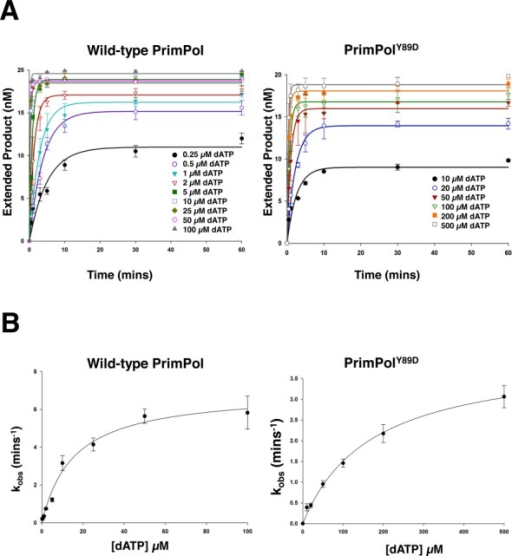 Kinetic analysis of human PrimPol and PrimPolY89D. Single turnover kinetics of wild-type and PrimPolY89D to determine catalytic efficiency (kpol) and dNTP binding efficiency (KD(dNTP)). (A) The concentration of extended DNA product, as determined by electrophoresis, was plotted against time and fit to an exponential curve for a number of dATP concentrations for wild-type and PrimPolY89D. These data were fit to exponential curves as described in Equation (1) and kobs was determined. (B) kobs was subsequently plot against dATP concentration for wild-type PrimPol and PrimPolY89D and these data were fit to hyperbolic curves as described in Equation (2) to determine kpol and KD(dNTP). kpol for wild-type PrimPol was found to be 6.98 min−1 ± 0.40 and KD(dNTP) was 15.51 μM ± 2.71. kpol for PrimPolY89D was 4.07 min−1 ± 0.19 and KD(dNTP) was 170.21 μM ± 18.80.